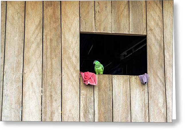 Parrot In A Window Greeting Card by Jess Kraft