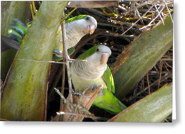 Parrot Pair Greeting Card
