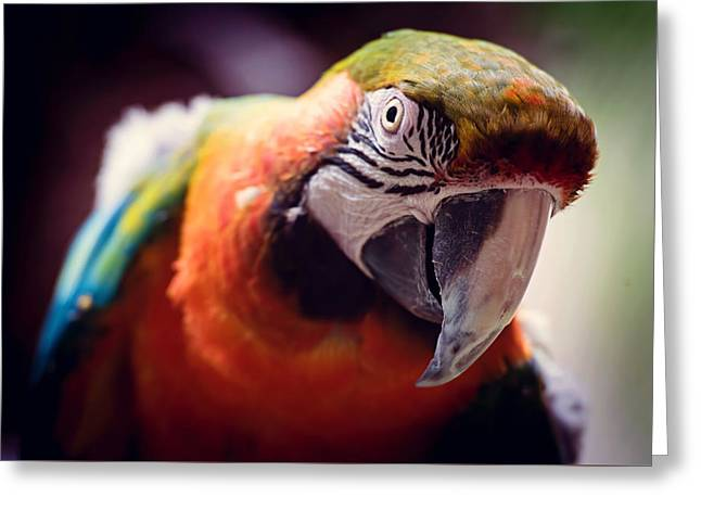 Parrot Selfie Greeting Card