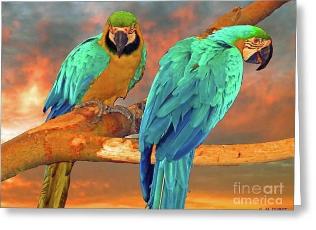 Parrots At Sunset Greeting Card
