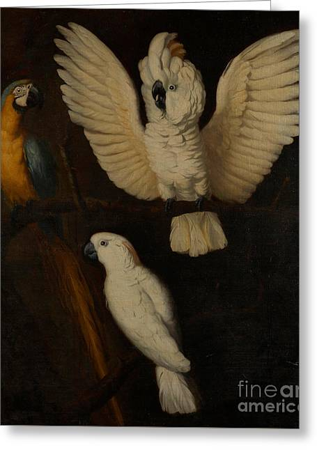 Parrots Greeting Card by Dutch School