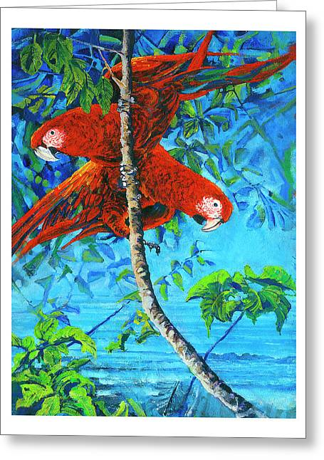 Parrots In Canopy Above Greeting Card
