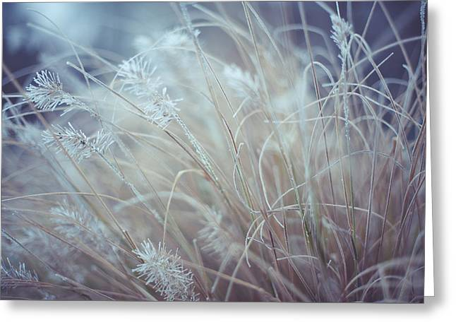 Part Of Translucent Reality. White Grass Greeting Card by Jenny Rainbow