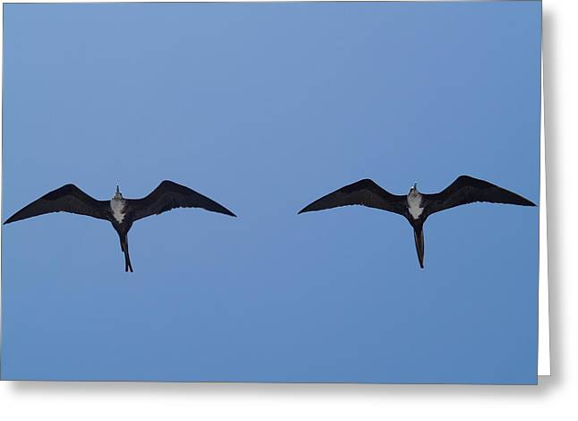 Partners In Flight Greeting Card by Richard Mansfield