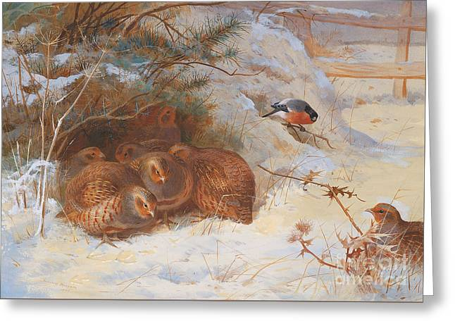 Partridge And A Bullfinch In The Snow  Greeting Card