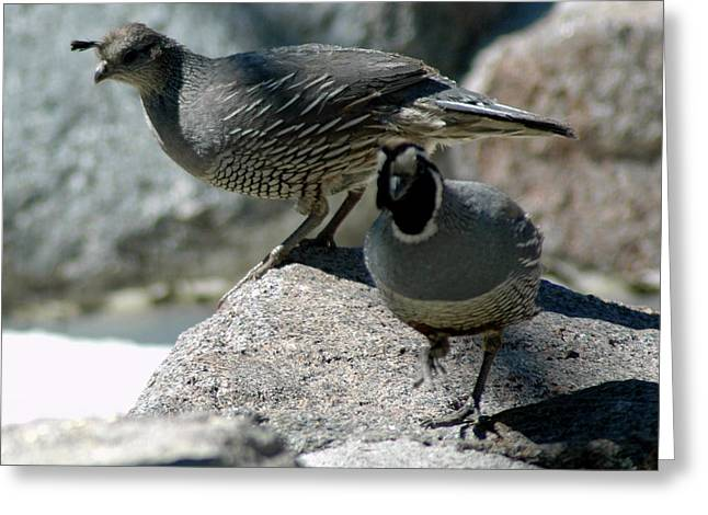 Partridge Pair Reno Nv Greeting Card