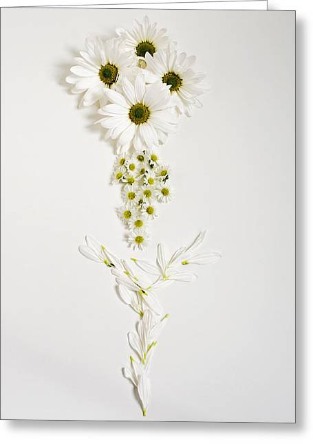 Parts Of A Daisy  Greeting Card