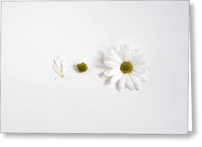 Parts Of A Shasta Daisy Greeting Card