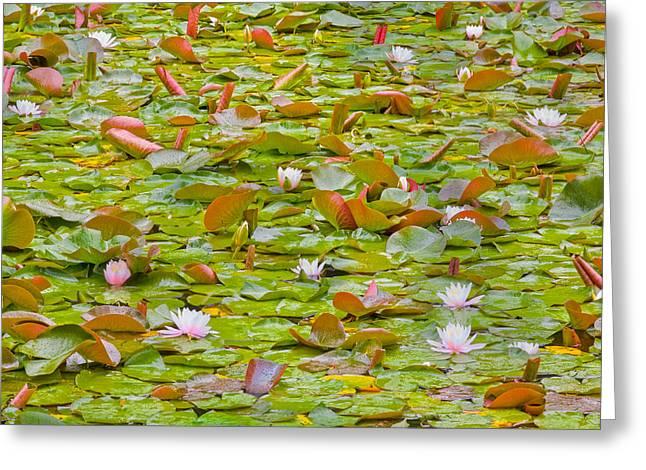 Party At Kaloya Pond Greeting Card
