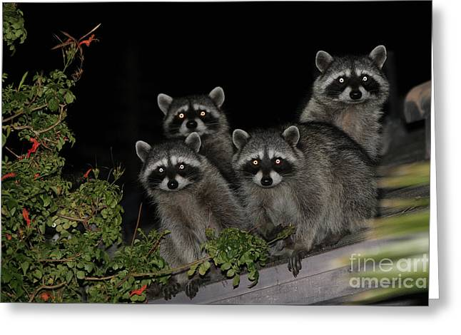 Party Of Five On The Roof Top Greeting Card