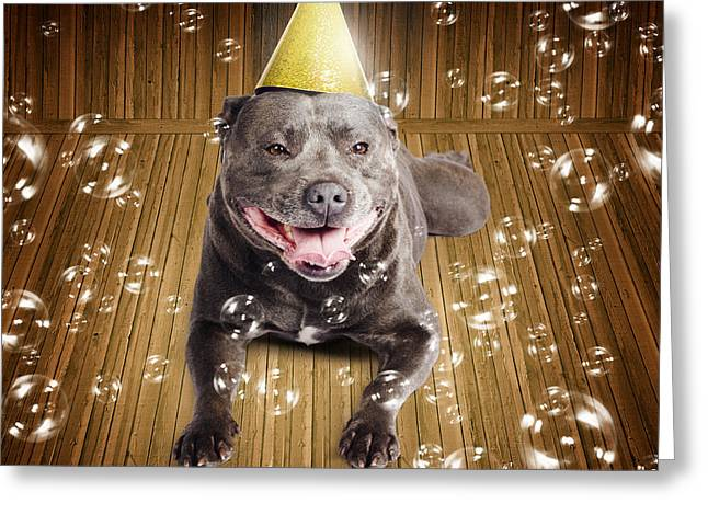 Partytime For A Staffie Birthday Dog Greeting Card by Jorgo Photography - Wall Art Gallery