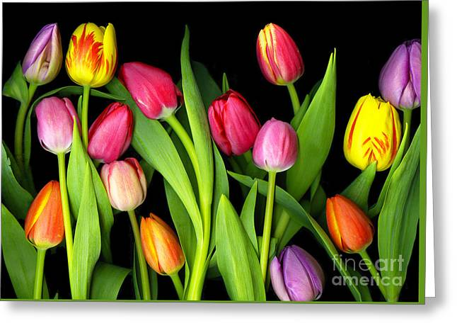 Tulips Greeting Card by Christian Slanec