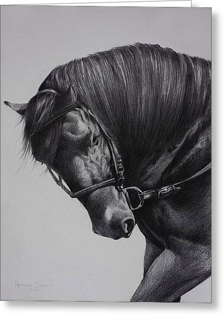 Shows Drawings Greeting Cards - Paso Fino Greeting Card by Harvie Brown
