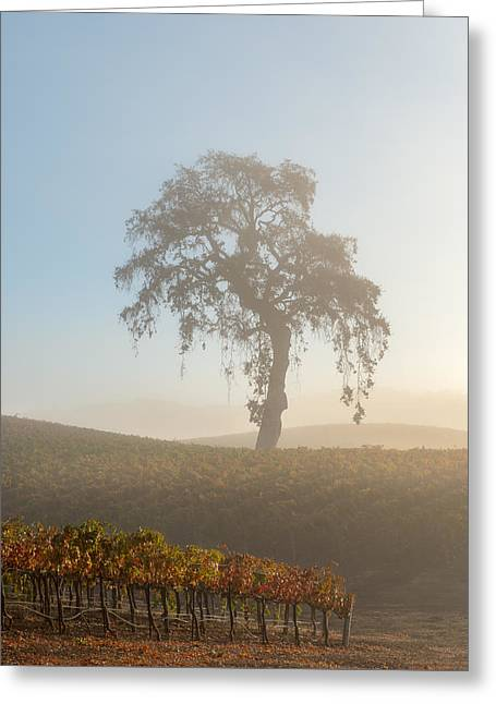 Paso Robles Morning Greeting Card by Joseph Smith
