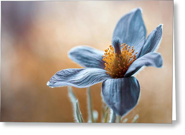 Pasque Greeting Card by Mandy Disher