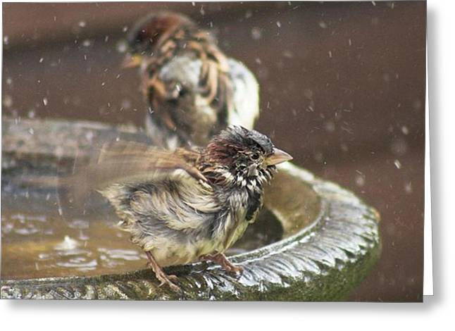 Pass The Towel Please: A House Sparrow Greeting Card by John Edwards