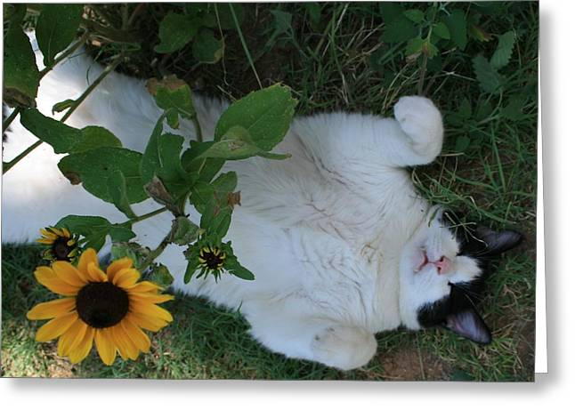 Passed Out Under The Daisies Greeting Card by Marna Edwards Flavell