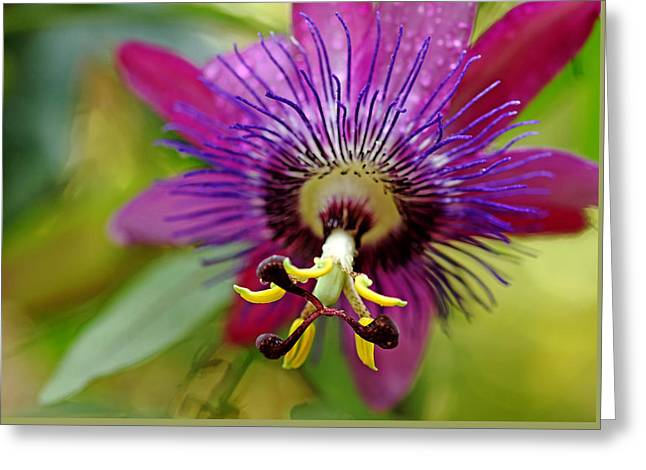 Passiflora Greeting Card by Debbie Oppermann