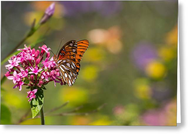 Greeting Card featuring the photograph Passion Butterfly  by Julie Andel
