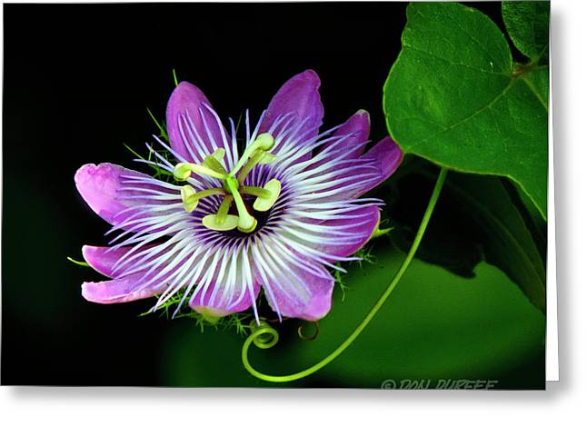 Passion Greeting Card by Don Durfee
