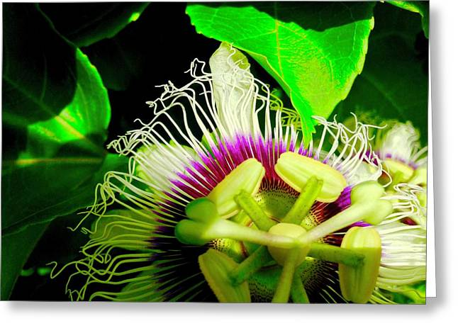 Passion Flower 2 Reflecting Greeting Card