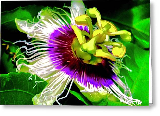 Passion Flower 3 Uplift Greeting Card