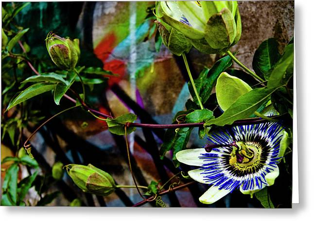 Passion Flower Greeting Cards - Passion Flower Graffiti Greeting Card by Grebo Gray