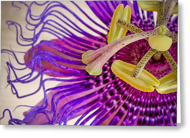 Greeting Card featuring the photograph Passion Flower Squared by TK Goforth