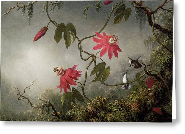 Passion Flowers And Hummingbird Greeting Card by Martin Johnson Heade