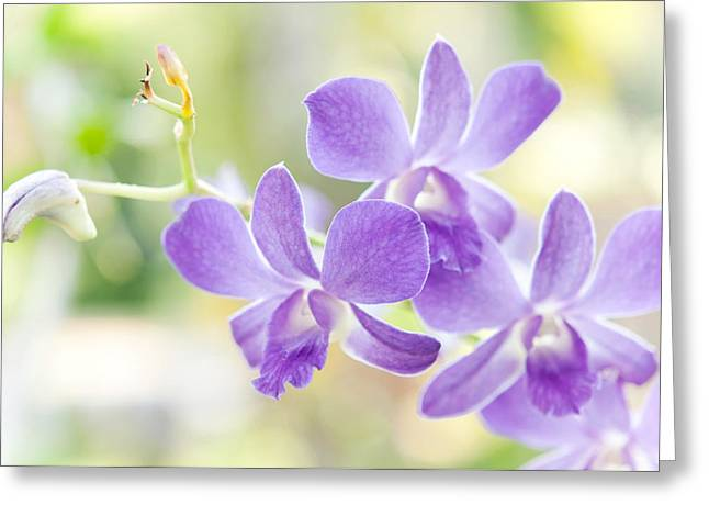 Passion For Flowers. Purple Orchids Greeting Card by Jenny Rainbow