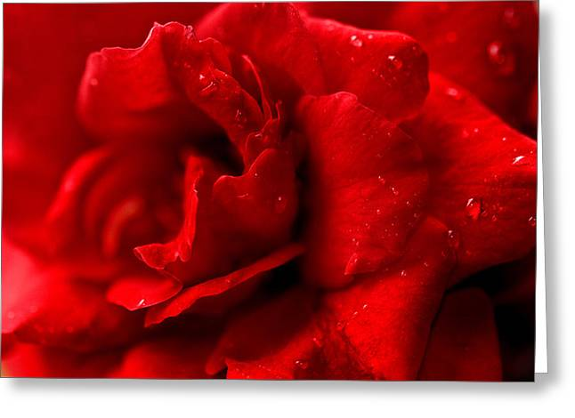 Passion For Flowers. Sensual Petals Greeting Card by Jenny Rainbow
