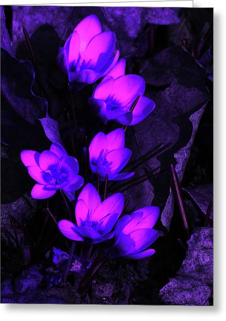 Passionate Blooms Greeting Card by Karol Livote