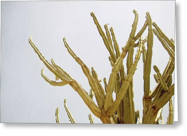 Pastel Cactus- Art By Linda Woods Greeting Card