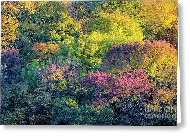 Pastel Colors Of Fall Radnor Lake Nashville Tn Greeting Card