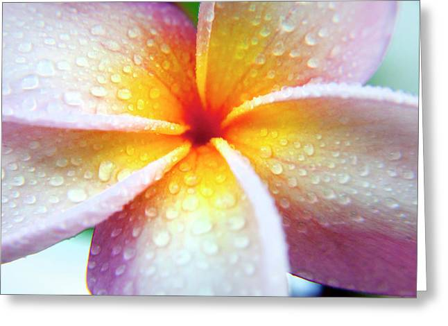 Pastel Droplets Greeting Card by Sean Davey