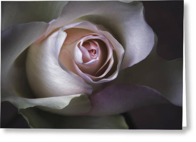 Floral Photographs Digital Greeting Cards - Pastel Flower Rose Closeup Image Greeting Card by Artecco Fine Art Photography