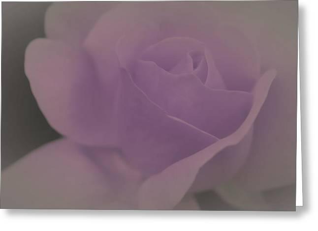 Pastel Lilac Rose Greeting Card