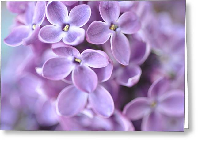 Pastel Lilacs Greeting Card