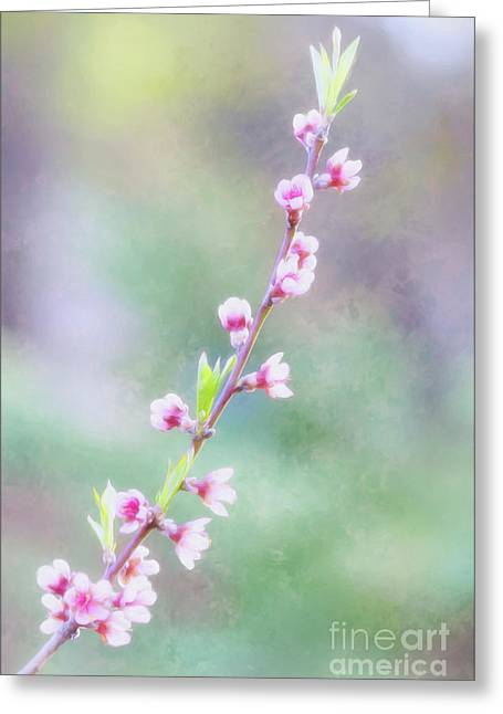 Pastel Painted Peach Blossoms Greeting Card