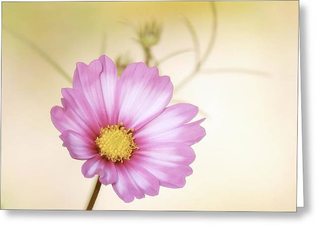 Pastel Petals Greeting Card