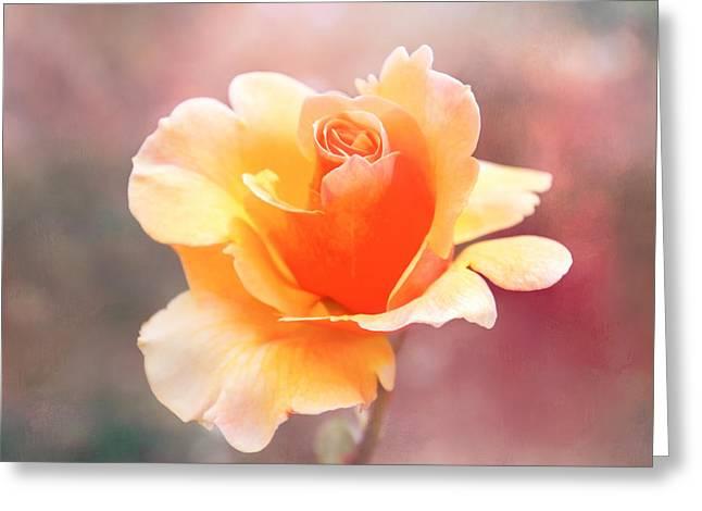 Pastel Rose Greeting Card by Terry Davis