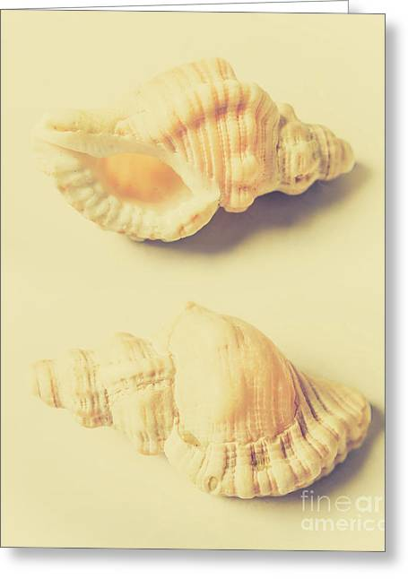 Pastel Seashell Fine Art Greeting Card by Jorgo Photography - Wall Art Gallery