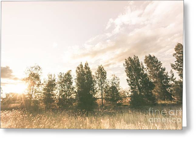Pastel Sunset Forest Greeting Card