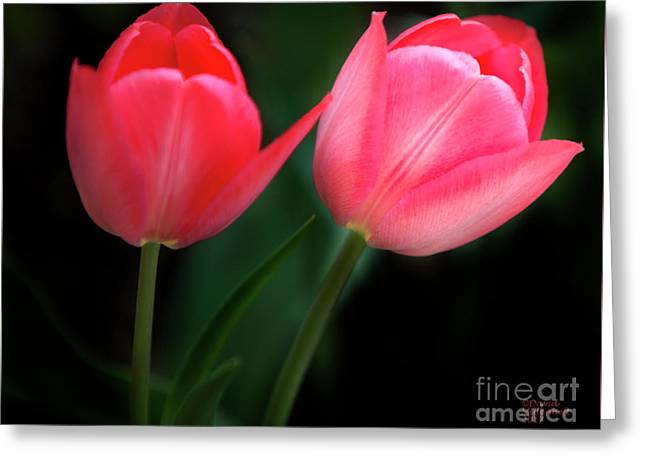 Greeting Card featuring the photograph Pastel Tulips by David Millenheft