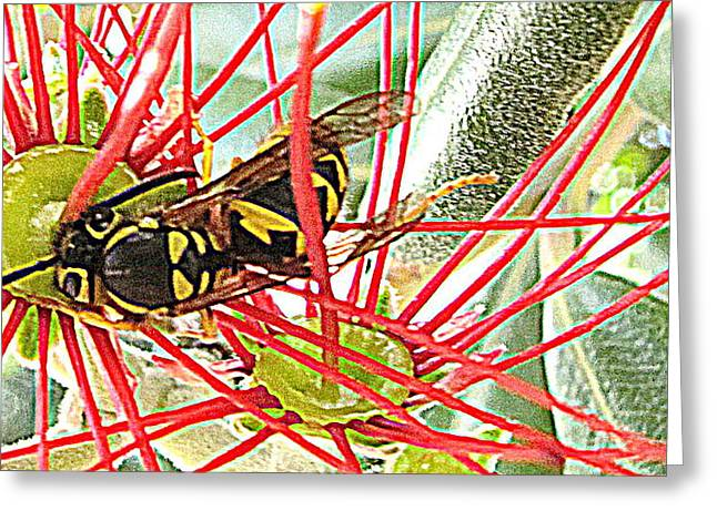 Pastel Yellow Jacket In Red Greeting Card