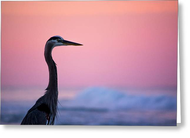 Pastels At Sunrise Greeting Card by Shelby Young