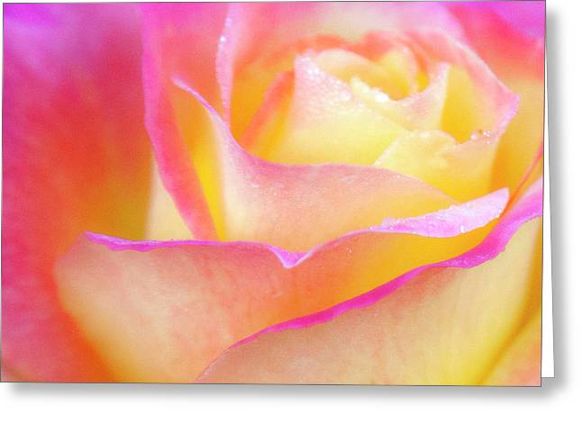 Pastels Greeting Card by David Millenheft