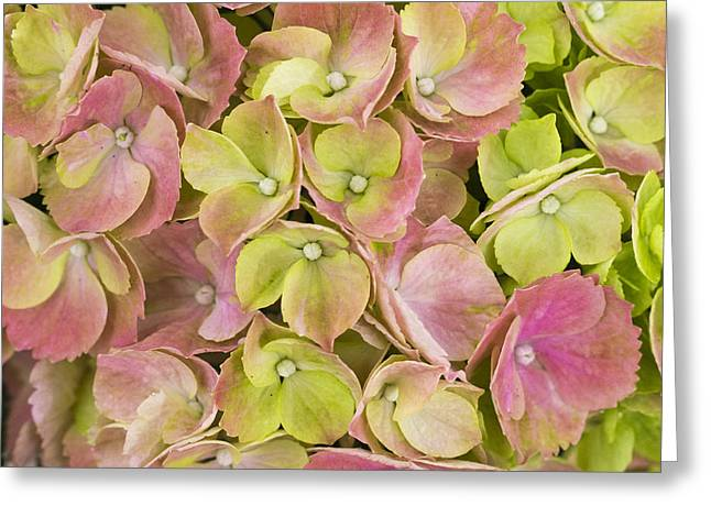 Pastels Greeting Card by Eggers Photography