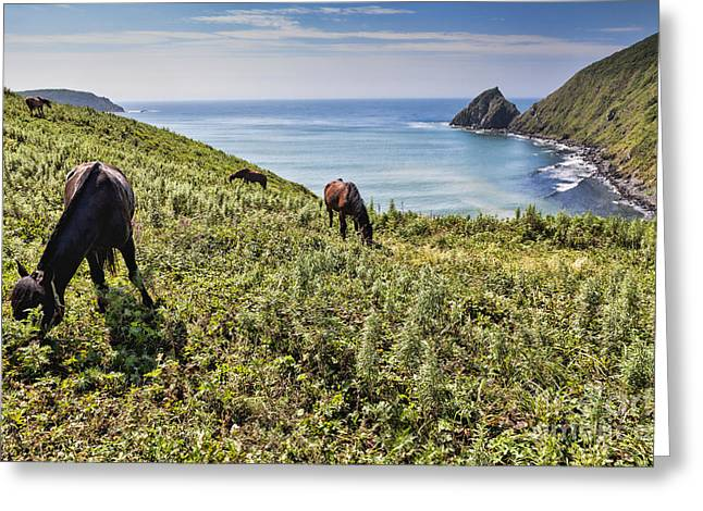 Pasture #2746 Greeting Card