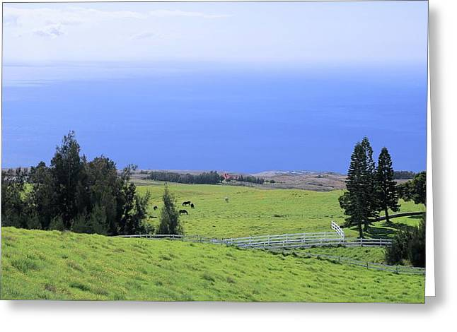 Pasture By The Ocean Greeting Card